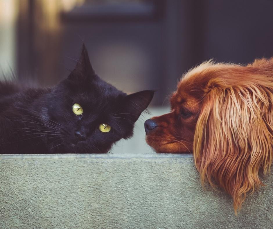Může pronajímatel zakázat nájemníkovi chovat v bytě zvíře